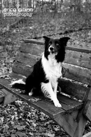 Atlanta Pet Photography Atlanta Pet Photographer 2439bw.jpg