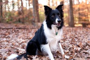 Atlanta Pet Photography Atlanta Pet Photographer 2458.jpg