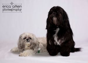 Atlanta Pet Photography Atlanta Pet Photographer 3636.jpg