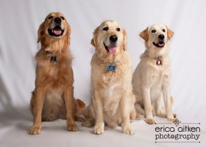 Atlanta Pet Photography Atlanta Pet Photographer 3760.jpg