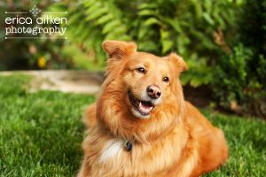 Atlanta-Dog-Photographer-Natural-Light.jpg